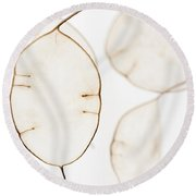 Translucent Round Beach Towel