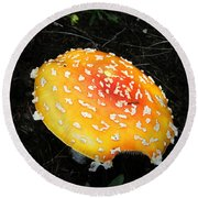 Treasures Of The Forest Two Round Beach Towel
