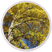 Tree 4 Round Beach Towel