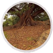 Tree At Royal Botanic Garden Round Beach Towel