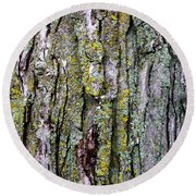 Tree Bark Detail Study Round Beach Towel by Design Turnpike