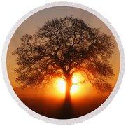 Tree Fog Sunrise Round Beach Towel