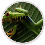 Tree Frog 16 Round Beach Towel