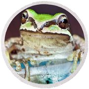 Tree Frog Round Beach Towel by Jean Noren