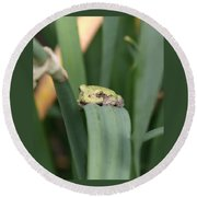 Tree Frog Up Close Round Beach Towel