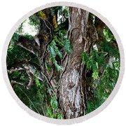 Tree In Kauai Round Beach Towel