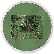 Tree Kitten Round Beach Towel