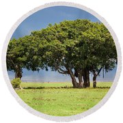 Tree On Savannah. Ngorongoro In Tanzania Round Beach Towel