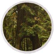 Tree Redwood Ca 7 Round Beach Towel