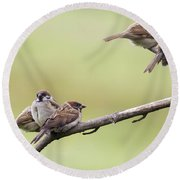 Tree Sparrows Round Beach Towel