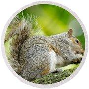 Tree Squirrel Round Beach Towel