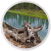 Tree Stump In Des Chutes Nf-or Round Beach Towel