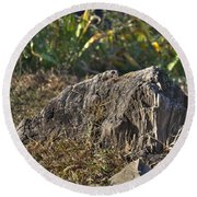 Tree Stump Round Beach Towel