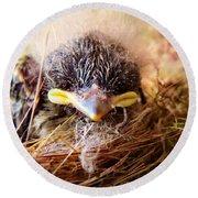 Tree Swallow Fledglings Round Beach Towel
