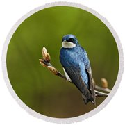 Tree Swallow Pictures 27 Round Beach Towel