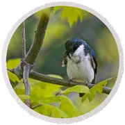 Tree Swallow Pictures 39 Round Beach Towel