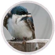 Tree Swallow Pictures 47 Round Beach Towel