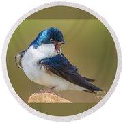 Tree Swallow Squawking Round Beach Towel