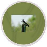 Tree Swallow Wink Round Beach Towel