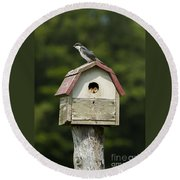 Tree Swallow With Young Round Beach Towel