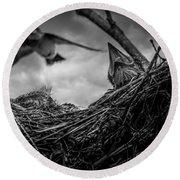 Tree Swallows In Nest Round Beach Towel