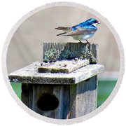 Tree Swallows Round Beach Towel