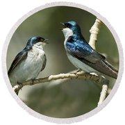 Tree Swallows Singing Round Beach Towel