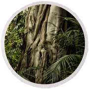 Tree Trunk And Ferns Round Beach Towel