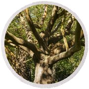 Tree Trunk And Limbs Round Beach Towel