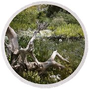 Tree Trunk In The Meadow Round Beach Towel