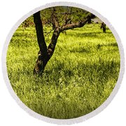 Tree Trunks In A Peach Orchard Round Beach Towel