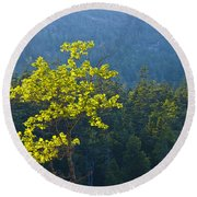 Tree With Yellow Leaves In Acadia National Park Round Beach Towel