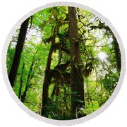 Trees In The Hoh National Rain Forest Round Beach Towel