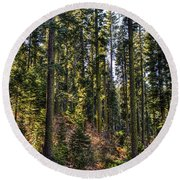 Trees With Moss In The Forest Round Beach Towel