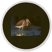 Tricolor Heron With Small Fish Round Beach Towel