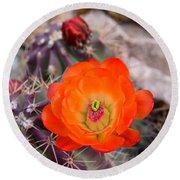 Trichocereus Cactus Flower  Round Beach Towel