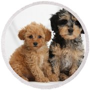 Tricolor Merle Daxie-doodle And Red Toy Round Beach Towel