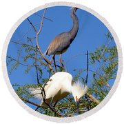 Tricolored Heron And Snowy Egret Round Beach Towel