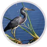 Tricolored Heron At The Pond Round Beach Towel