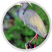 Tricolored Heron In Breeding Plumage Round Beach Towel