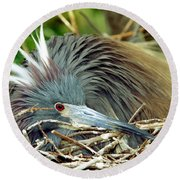 Tricolored Heron Incubating Eggs Round Beach Towel