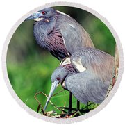 Tricolored Heron Male And Female At Nest Round Beach Towel
