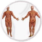 Trigger Points On The Human Body Round Beach Towel