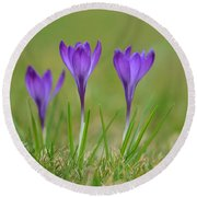 Trio In Violet Round Beach Towel
