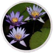 Trio Of Purple Water Lilies Round Beach Towel