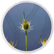 Trio Of Teasels Round Beach Towel