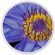 Tropical Day Flowering Waterlily Round Beach Towel