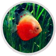Tropical Discus Fish Round Beach Towel by Amy Vangsgard