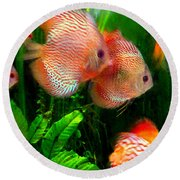 Tropical Discus Fish Group Round Beach Towel