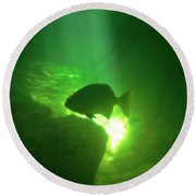 Tropical Fish Shilouette In A Cenote Round Beach Towel